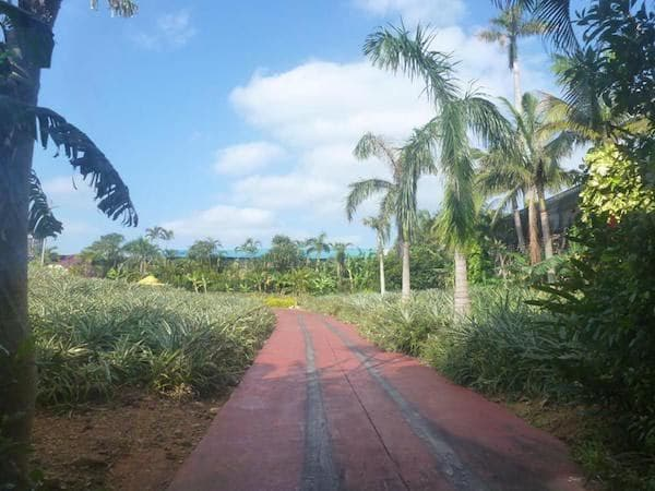 Pineapple Park-004