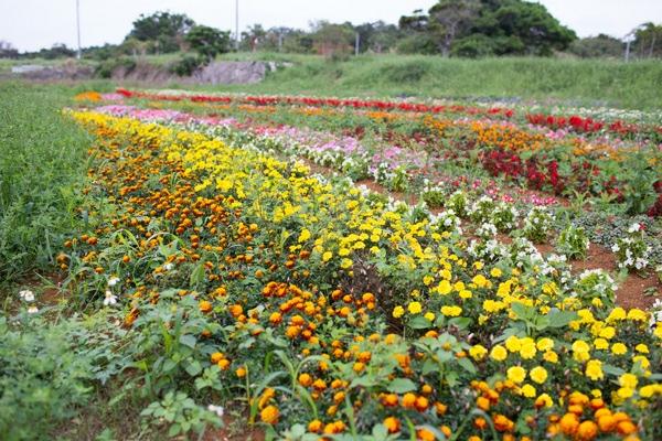 Uchina Farm-4