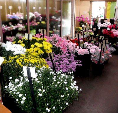Meruhen Flower Shop l Okinawa Hai!