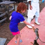 Exotic Petting Zoo l Okinawa Hai!