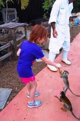 Exotic Petting Zoo l Okinawa Hai!