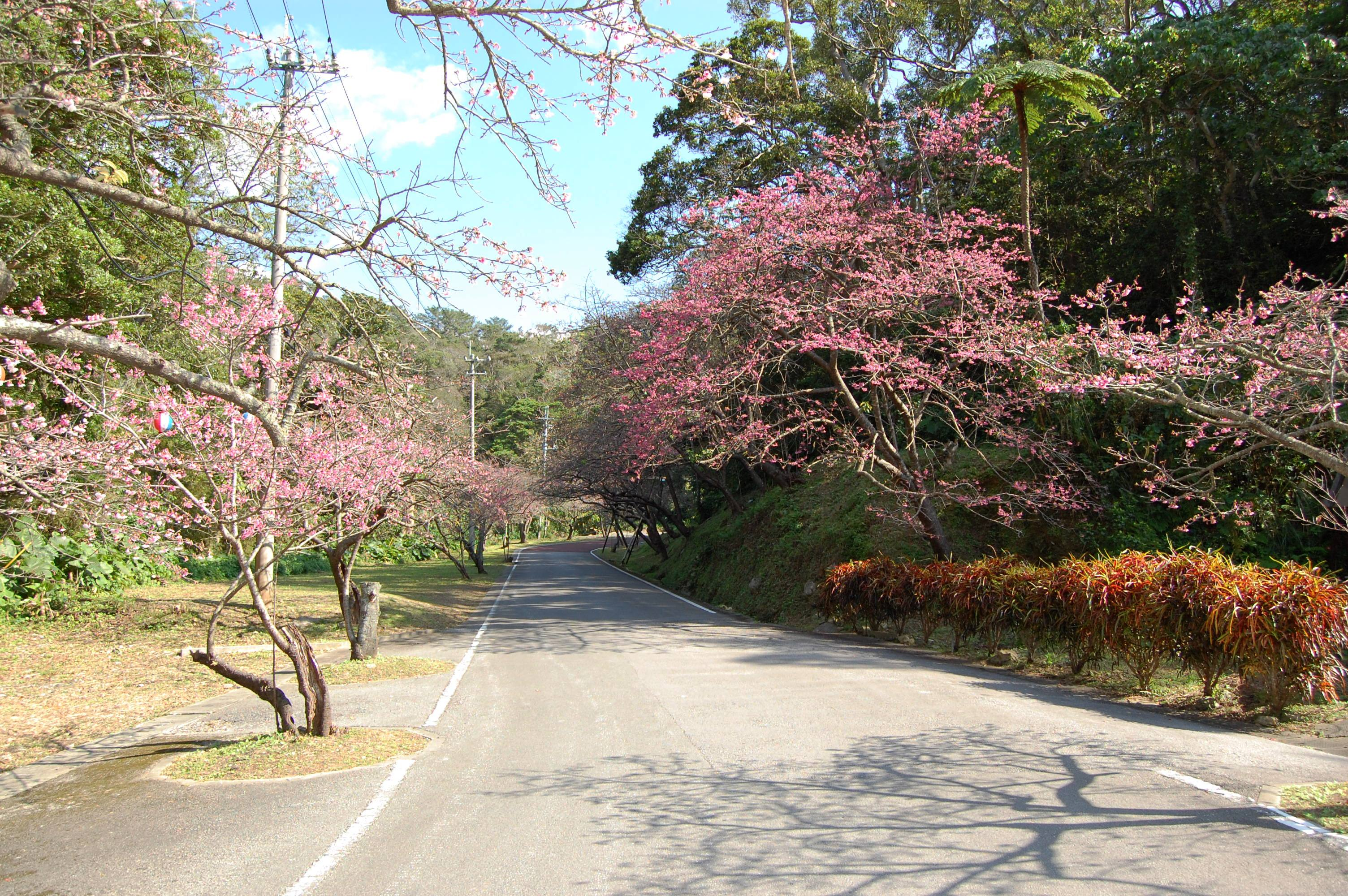 Mount Yaedake and Sakura no Mori Park l Okinawa Hai!