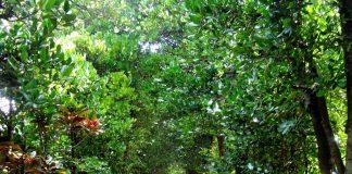 Bise Tree Road l Okinawa Hai!