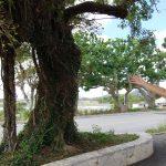 Matsuda Mēgā Gama Cave and Remains Tour l Okinawa Hai!