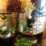 Bacchus Flower Shop l Okinawa Hai!