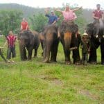 Elephant Rescue in Chiang Mai | Okinawa Hai!