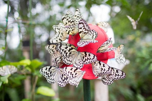 Ryugujo Butterfly Garden_-2