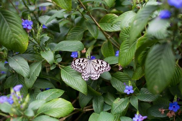 Ryugujo Butterfly Garden_-6