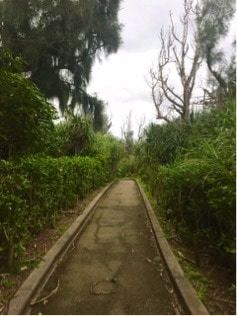 Cape Maeda4